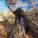 Withering Away by BGSPhoto