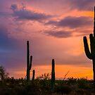Saguaro Twilight by Radek Hofman