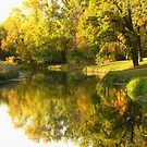 Golden Reflections by lorilee