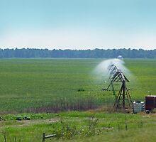 Irrigation by WildestArt