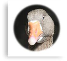Domestic Goose / Hausgans Canvas Print