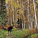 To Hike With A Moose Tablet Case by Gene Praag
