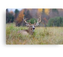 Autumn in Canada - White tailed deer Buck Metal Print