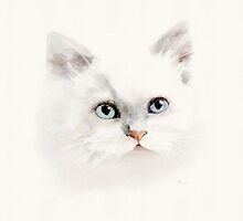 White Cat with Blue Eyes by Bamalam Art and Photography