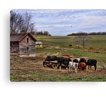 Hungry Cows Canvas Print