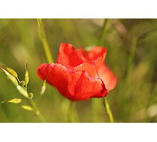 Summer Silk - Lest We Forget... Photographic Print