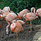Flamingo Ridge by Scott Mitchell