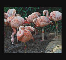 Flamingo Ridge Kids Clothes