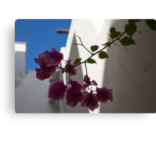 Contemplating Mediterranean Vacations - Whitewashed Walls and Bougainvilleas Canvas Print