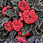 Red flowers by Roxy J