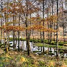 Glenfinnan, Scotland by 242Digital