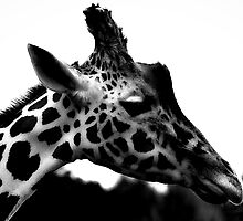 Portrait of a Giraffe by liberthine01