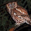 Eastern Screech Owl / Red Morph by Gary Fairhead