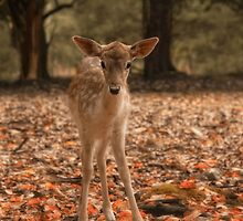 Autumn Fawn by Robin-Lee