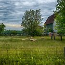 Summer Barn by JKKimball