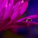 Jewel of dew  by Nicole  Markmann Nelson