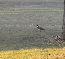 Plover by KittenFlower
