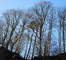 The Trees on Top by Lindamell