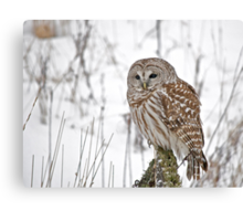 Special visitor Canvas Print
