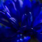 Midnight Blue  by Nicole  Markmann Nelson