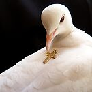 Unconditional Love - White Collard Dove - NZ by AndreaEL