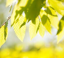 Young Elm leaves on blurred green  by Arletta Cwalina