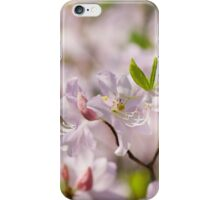 Stem of pink Rhododendron called Azalea flowers  iPhone Case/Skin