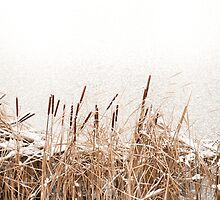 Snow on Typha reeds and frozen water  by Arletta Cwalina