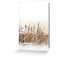 Snow on Typha reeds and frozen water  Greeting Card