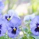 Blue Pansies by Gabrielle  Lees