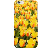 yellow and red Stresa tulips abloom  iPhone Case/Skin