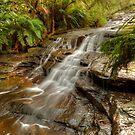 Aqua Silk, Rocks & Ferns by Michael Matthews