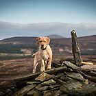 On Top of the World by Northline