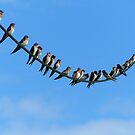 Bird On A Wire - Welcome Swallows NZ by AndreaEL