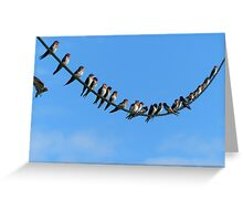 Bird On A Wire - Welcome Swallows NZ Greeting Card