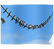 Bird On A Wire - Welcome Swallows NZ Poster