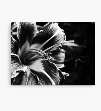 Black and White Lily Canvas Print