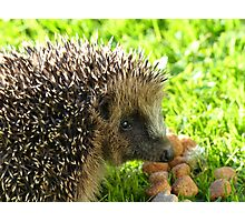 Thank You... You Saved My Life... - Hedgehog - NZ Photographic Print