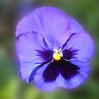 Pretty Purple Pansy by SunriseRose