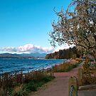 Sunshine Coast 6 by Priscilla Turner