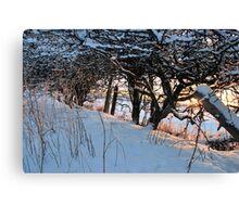 Hedge Bottom Canvas Print