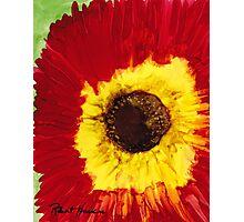 STRAW FLOWER Photographic Print