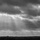 A little ray of light in Black and White by Avril Harris