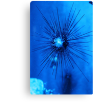 Bristol aquarium Canvas Print