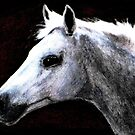 Portrait of a Pale Horse by AngieDavies