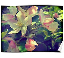 Pink Apple Blossom 4 Poster