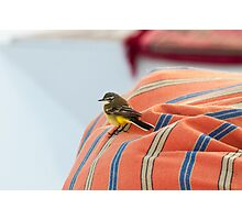 Wagtail on a boat Photographic Print