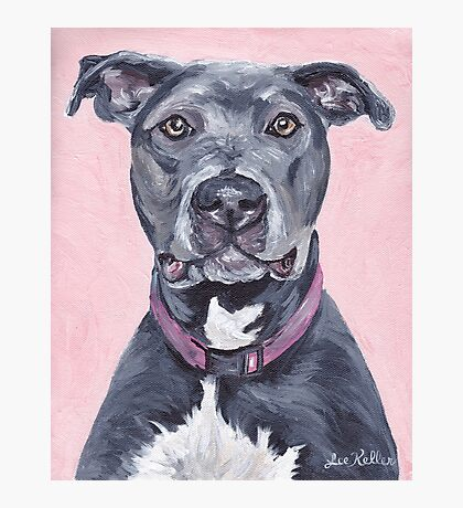 Pit Bull Dog Art Photographic Print
