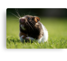 Hamster in the Grass Canvas Print