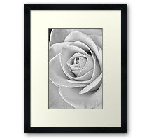 Beautiful Rose Black and White Framed Print